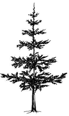 Pine tree tattoo back posts Ideas Pine Tattoo, Kiefer Silhouette, Easy Drawings, Pencil Drawings, Tree Tattoo Back, Pine Tree Silhouette, Pencil Trees, Tree Stencil, Stencils