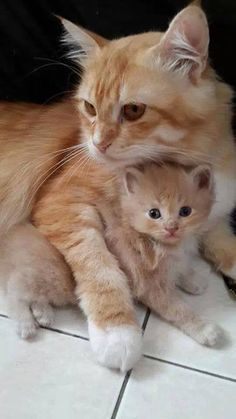 Protection precious kitten with mother.