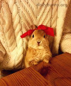 It's the Daily Bunny's Christmas 2014 Mega-Post! 2