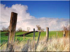 Hasított akác karó, karám Fence Design, Picture Design, Exotic, Home Improvement, Plants, Pictures, Photos, Plant, Home Improvements