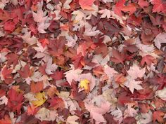 Fall colours in Monferrato Land by Tacchino Raffaele Vini