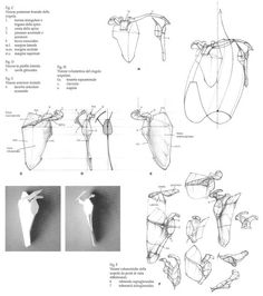 Enjoy a collection of references for Character Design: Bones Anatomy. The collection contains illustrations, sketches, model sheets and tutorials… This Anatomy Bones, Face Anatomy, Anatomy Study, Anatomy Art, Anatomy Drawing, Anatomy Reference, Human Anatomy, Drawing Reference, Gesture Drawing Poses
