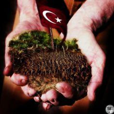 BAYRAK Martyrs' Day, Gallipoli Campaign, Anzac Cove, Turkey Travel, Ottoman Empire, Victorious, Ale, Dandelion, History