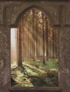 Mystic Forest Window Wall Mural