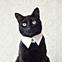 Rover Pointed Cat Collar #catclothes #petclothes #socute