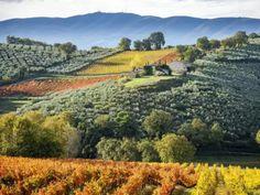 Vineyard, Italy, Outdoor, Outdoors, Italia, Vine Yard, Vineyard Vines, Outdoor Games, The Great Outdoors