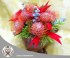 Pin cushions have a way of making themselves look very festive! Visit the Garden Route Mall and purchase a variety of pin cushions and fynbos. Bofberg Flowers can also make custom bouquets for you. Pin Cushions, Mall, Woodland, Christmas Wreaths, Gift Wrapping, Pretoria, Lifestyle, Holiday Decor, Garden