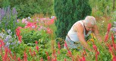 September ist Erntesaison im Garten. Auch fürs Frühjahr wird jetzt vorbereitet. Das steht im Spätsommer in punkto Gartenarbeit und Gartenpflege an.