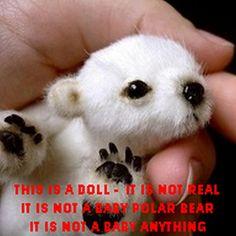 This is a Doll. It is not Real. It is not a baby Polar Bear.