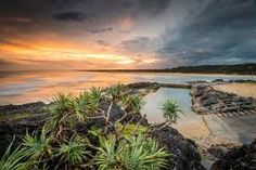 Image result for sawtell rock pool Rock Pools, Plants, Image, Natural Pools, Plant, Planting, Planets