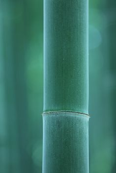 Bamboo forest, Kyoto, Japan Great Reads from Exceptional Authors at http://wildbluepress.com. True crime, thrillers, mystery and business productivity books.