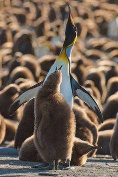 Sublime 22 A lovely cute penguin https://meowlogy.com/2018/02/13/22-lovely-cute-penguin/ A great measure to decide if your topic is too broad is whether you're able to describe it in a couple of words