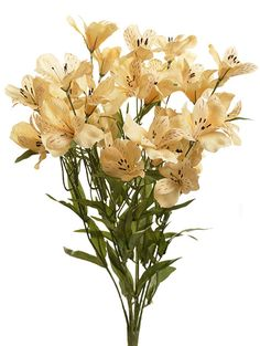 "ALSTROMERIA BUSH X9, 21"" - CHOOSE FROM 6 COLORS"