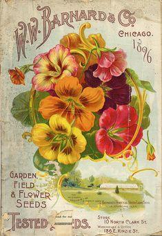 Nasturtium  Vintage Seed Packet #vintagelettering