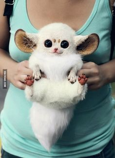 This is an Inari fox. Or a Pokémon, I'm not sure.