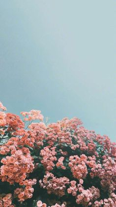 100 Beautiful iPhone wallpaper , iphone background, summer ,flower – Jessie – – World Flor Iphone Wallpaper, Wallpaper Pastel, Frühling Wallpaper, Spring Wallpaper, Sunflower Wallpaper, Iphone Background Wallpaper, Wallpaper Pictures, Iphone Backgrounds, Iphone Wallpapers