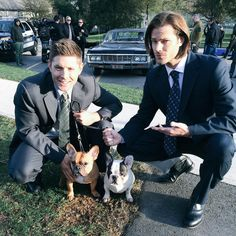 Tweet: Carlos The Frenchie @carlosandjorge · 1h Hanging out with @JensenAckles & @jarpad on the set of @cw_spn #Supernatural @cw_network #SPNFamily #frenchbulldogs