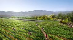World's largest green roof unveiled in the heart of Silicon Va...