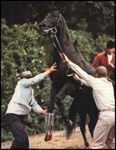 Ruffian being loaded into an ambulance after breaking down, her hoof dangling uselessly. After surgery she awoke and thrashed violently in the recovery stall and undid the surgery,also breaking her knee. She was euthanized afterwards.