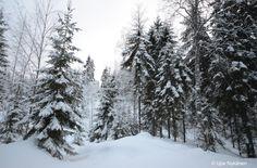 Synninlukko-kallion-paalla-talvi Luminen metsä ämsän ja Jämsänkosken välimaastosta löytyy hauskanniminen paikka: Synninlukko Finland