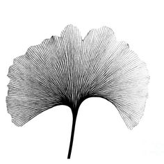 Radiograph Art Print featuring the photograph X-ray Of Ginkgo Leaf by Bert Myers