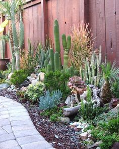 4 Creative Tips: Backyard Garden Wall Diy Projects backyard garden inspiration tips.Backyard Garden Inspiration Tips backyard garden inspiration tips. Succulent Landscaping, Succulent Gardening, Cacti And Succulents, Planting Succulents, Backyard Landscaping, Organic Gardening, Cacti Garden, Succulent Garden Ideas, Outdoor Cactus Garden