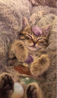 Cute Baby Cats, Cute Little Animals, Crystal Aesthetic, Pets 3, Cat Aesthetic, Pretty Cats, Minions, Kittens, Puppies