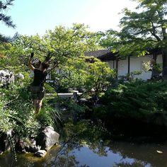 Dr. Sun Yat Sen Classical Chinese Garden, Vancouver, BC