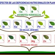 Diagrama 2: Efectos de las deficiencias nutricionales en plantas