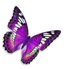 Purple Butterfly | Beautiful Purple Butterfly - Colors Photo (34605239) - Fanpop fanclubs