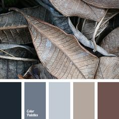 Color Palette beige, brown and black, contrast combination of warm and cold tones, creamy beig Beige Color Palette, Color Schemes Colour Palettes, Brown Color Schemes, Bedroom Color Schemes, Bedroom Colors, Blue Gray Bedroom, Grey Brown Bedrooms, Design Seeds, Color Balance