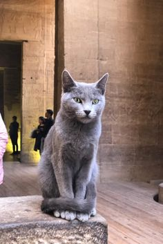 Cats In Ancient Egypt, In Ancient Times, Adorable Kittens, Cute Cats, Egyptian Jewelry, Domestic Cat, Cats And Kittens, Horses, Places
