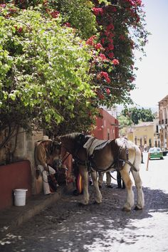 San Miguel de Allende. http://www.jamesnord.com/post/36148611240/san-miguel-de-allende