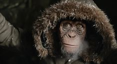 Steve Zahn in War for the Planet of the Apes