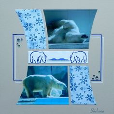 Ours polaires. Gabarit Panoramique Coup de griffe