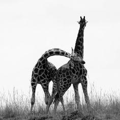 Africa2 218.jpg