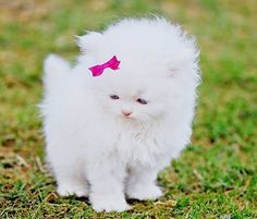 My future cat with a pink bow