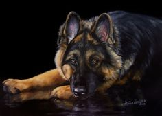 Shepherd Reflections - German Shepherd Dog original oil by Anne Zoutsos, painting by artist Anne Zoutsos