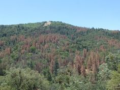 Climate change may be threatening nearly all U. forests with drought. Scientists have found that forests nationwide are experiencing drier conditions due to increasing drought and climate change. California Drought, State Forest, Global Warming, Climate Change, United States, Study, Science, American, Studio