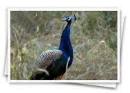 Rajasthan Wildlife Safari, Safari Tour Packages, Wildlife Safari Tours, India Wildlife Safari