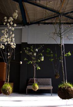 hanging trees