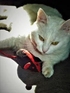 Myška pro kočku ze starého trička Emily The Strange, Cats, Animals, Gatos, Animales, Animaux, Animal, Cat, Animais