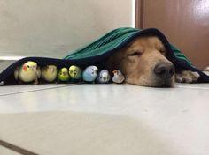 Les photos de Bob, le chien le plus placide du monde