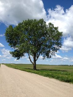 Summer ~ Tree in ND