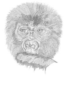 Dit plaatje heb ik gebruikt om de gezicht van de gorilla te arceren