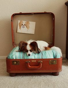 Adorable diy dog bed made out of a vintage suitcase and cute pillow! Complete with doggy artwork.