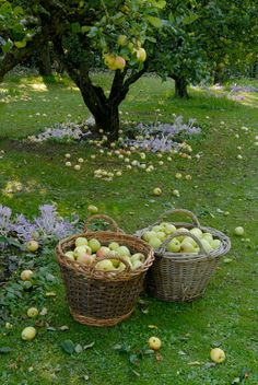 ~ wonderful memories of apple picking! ~ wonderful memories of apple picking! ~ wonderful memories of apple picking! Country Life, Country Living, Country Farm, Country Roads, Nature Aesthetic, Summer Aesthetic, Down On The Farm, Life On The Farm, Parcs