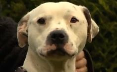 Meet the Miracle Dog Who Survived a Crossbow Bolt Through the Head
