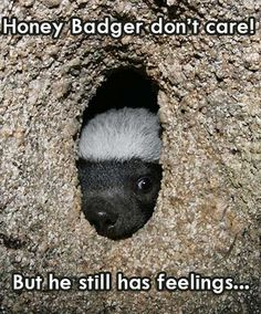 Poor little honey badger.