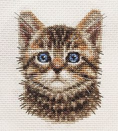 TABBY CAT, KITTEN, Detailed Face ~ Full counted cross stitch kit for you to sew